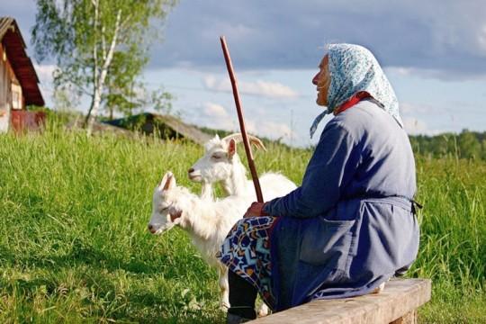 Старенька з козами