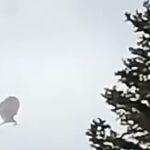 Над Канадою помічений НЛО